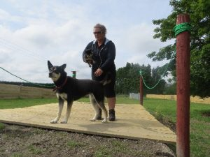 The Dog House owner Kirsten Diack on a ramp in a play area at the dog day care facility